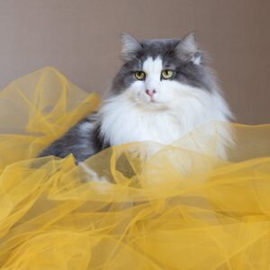 Fotolõuend Sabake kollases 45*30cm