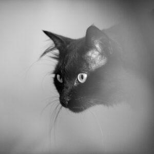 Fotolõuend Mustvalge Artur 40*30cm