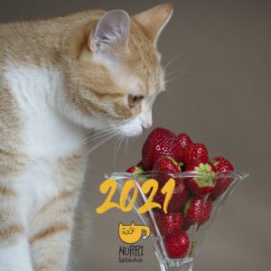 Kalender 2021 (2tk.)